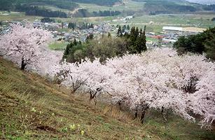 Flower tateyama 1