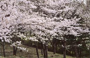 Flower tateyama 2